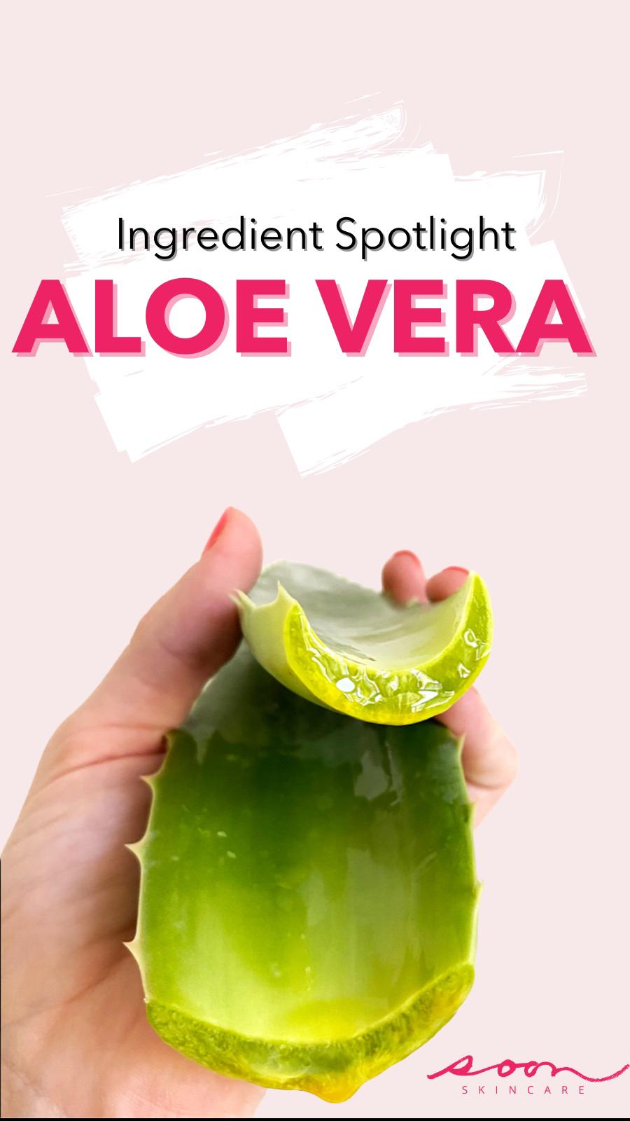 Ingredient Spotlight: Aloe Vera
