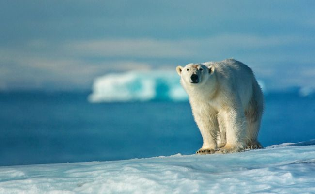 Victory! Millions of Acres Will Stay Protected for Polar Bears in Alaska
