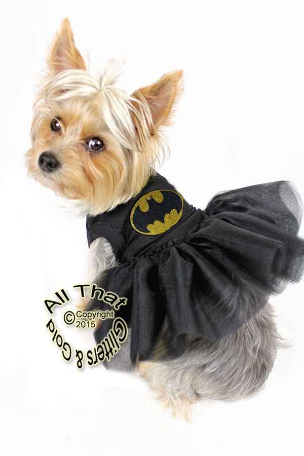 Black And Gold Glitter Batgirl Costume For Dogs Dog Halloween