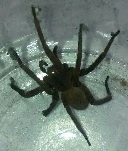 Aranha em casa. No quintal.