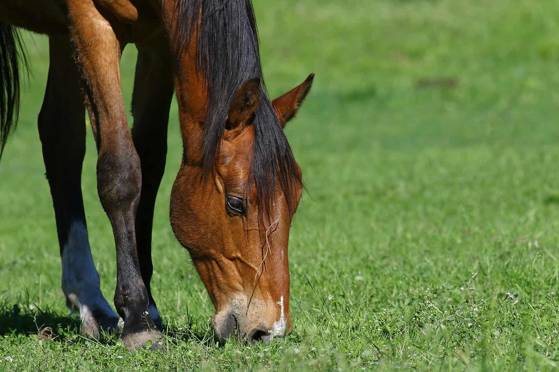 10 Equine Gut Health Resources On Thehorse Com The Horse Horses Horse Feed Equines