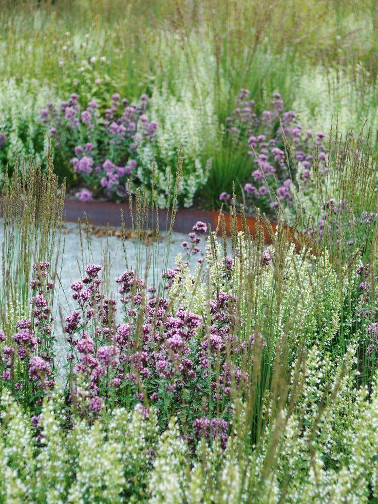 Moorhexe calamintha origanum piet oudolf enk ping for Piet oudolf pflanzen