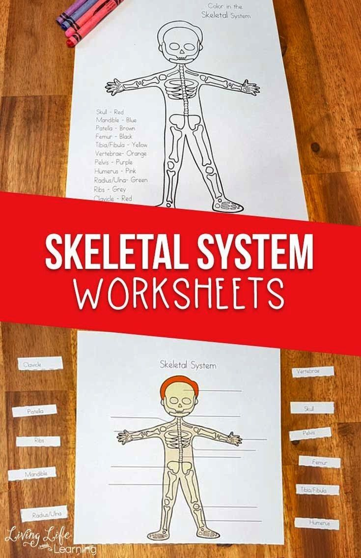 System Worksheets for Kids Is your child interested in the human body? Grab these skeletal system w