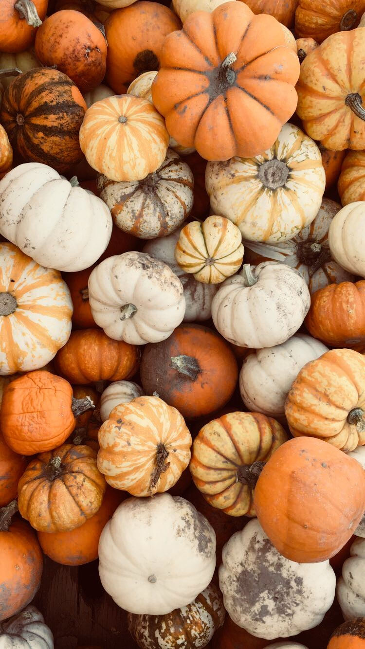 Kyaazuwnityegyyaℓ Pumpkin Wallpaper Fall Wallpaper Iphone Wallpaper Fall