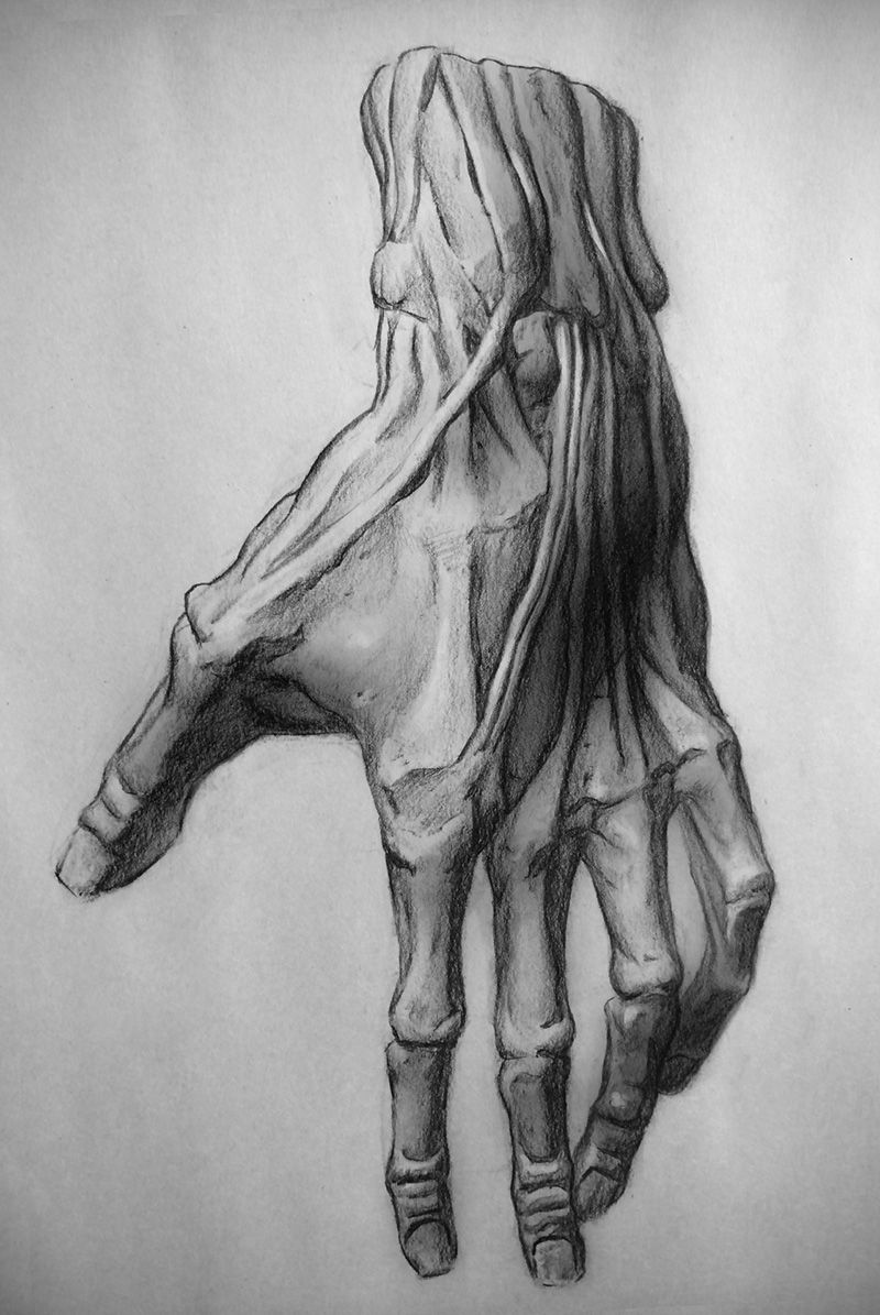 50 awesome sketch studies: This charcoal hand is just one of many ...