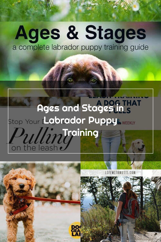 Pin Pa Training Tips