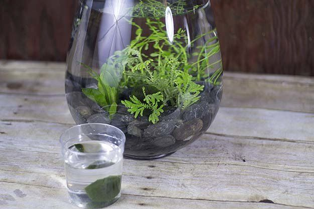 Aquatic Table Centerpiece Project Indoor Water Garden Small Fish Tanks Container Plants
