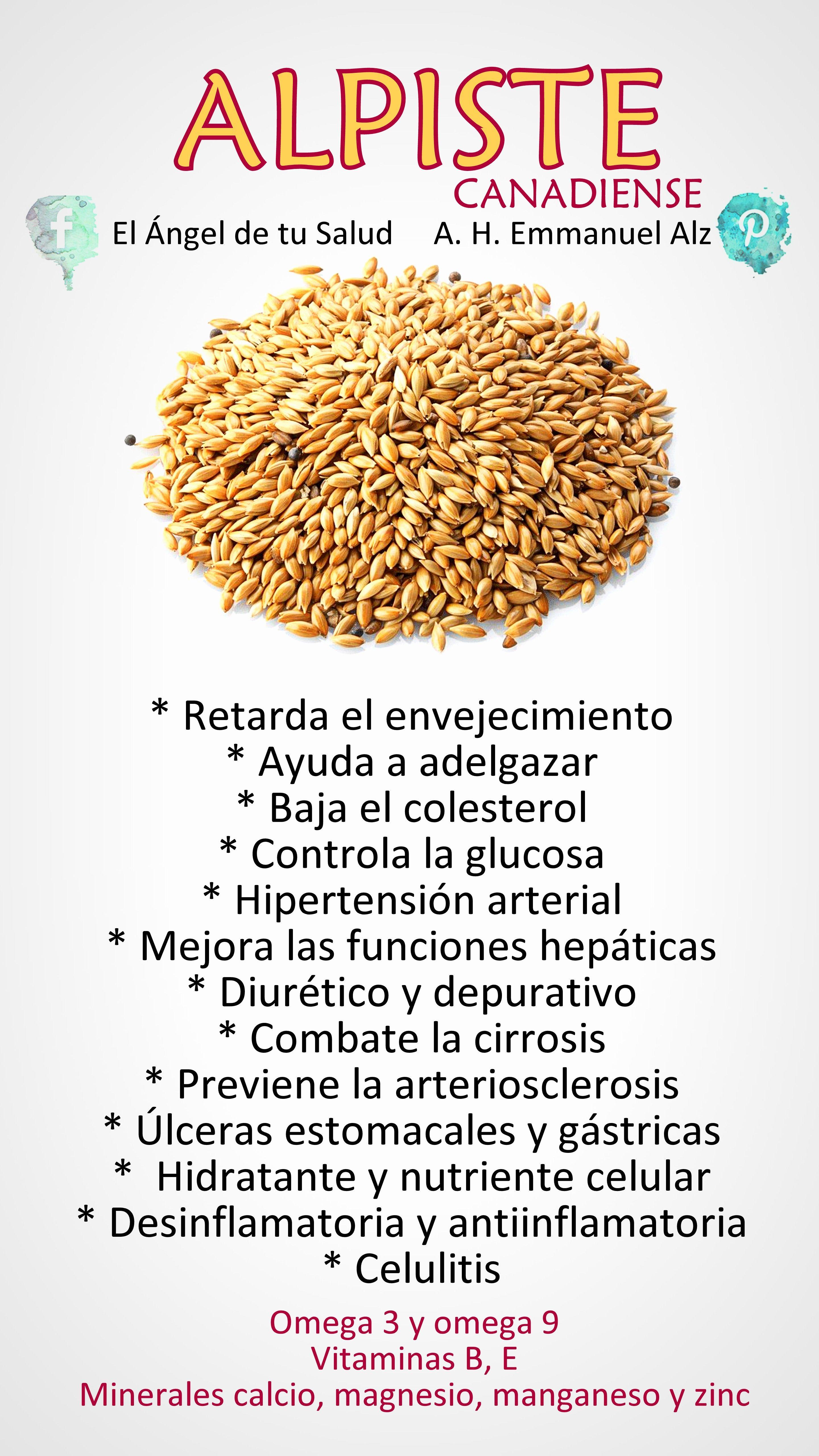 Beneficios Del Alpiste Canadiense Plantasmedicinales Naturales