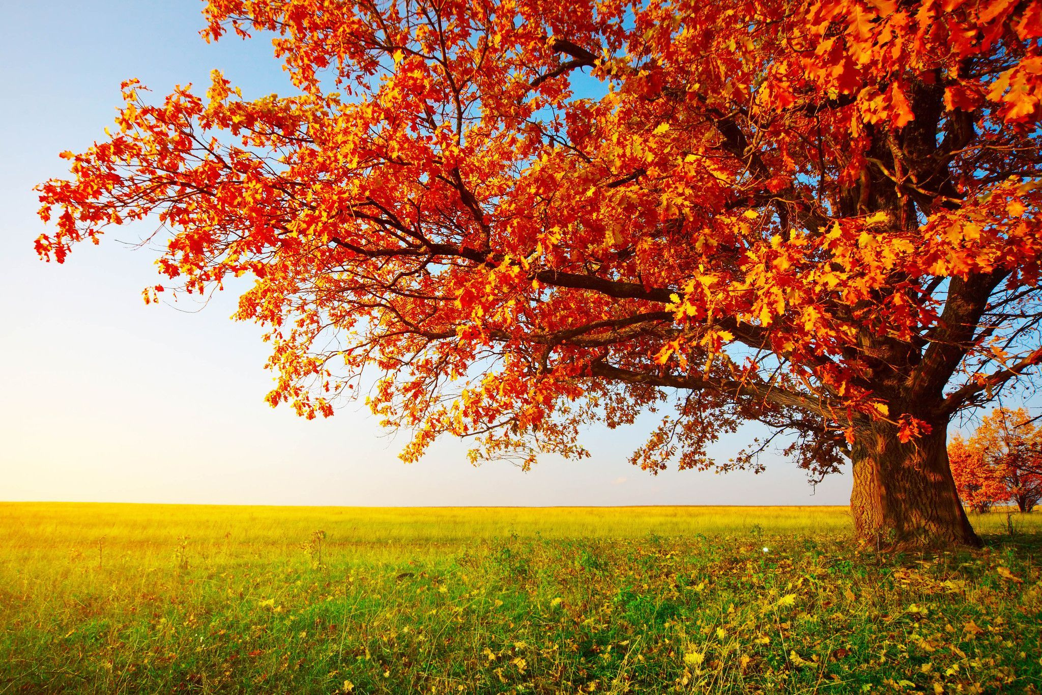 A Day In The Field Large Nature Landscape Canvas Photography Print Scenery Wallpaper Beautiful Scenery Wallpaper Autumn Trees