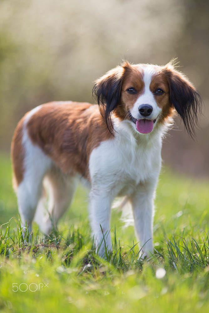 Cleo By Jennifer S On 500px Dog Breeds Beautiful Dogs Best Dogs