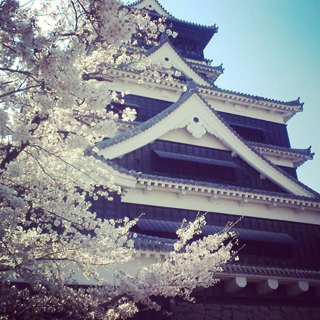 【jiyongyummmi】さんのInstagramをピンしています。 《#kumamoto #熊本城 #桜》