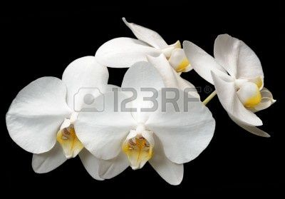 Stock Photo Purple Orchids Orchids White Orchids