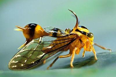 Femke Hiemstra's Blog: Membracidae