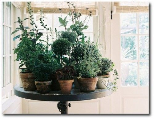Potted Plants, Potted Plants Inside, Gardening Inside, Indoor ...