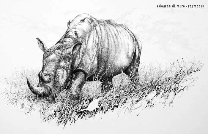 rhinocéros  illustration d'edoardo di muro