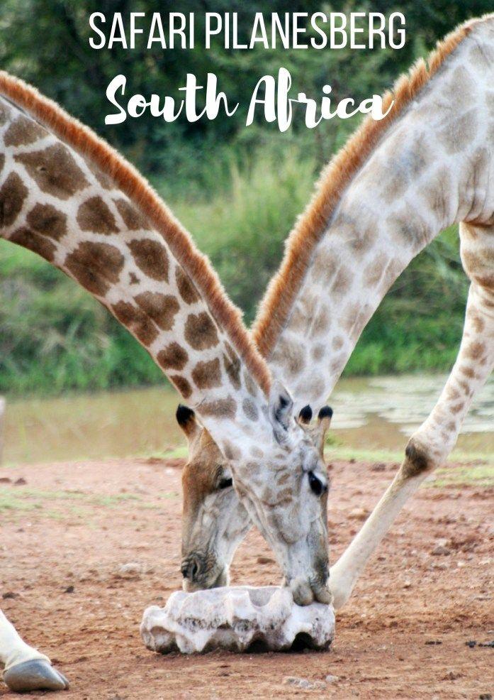 Africa Map Horn Of Africa%0A Doen in ZuidAfrika  safari in Pilanesberg  South Africa MapSouth