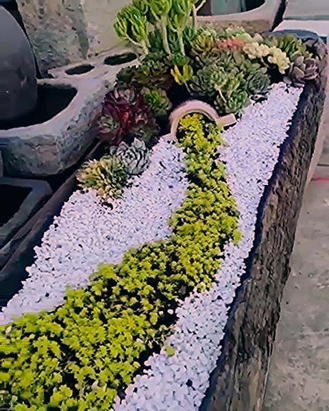 Photo of Exquisite Succulent Planter… WOW😱🌱
