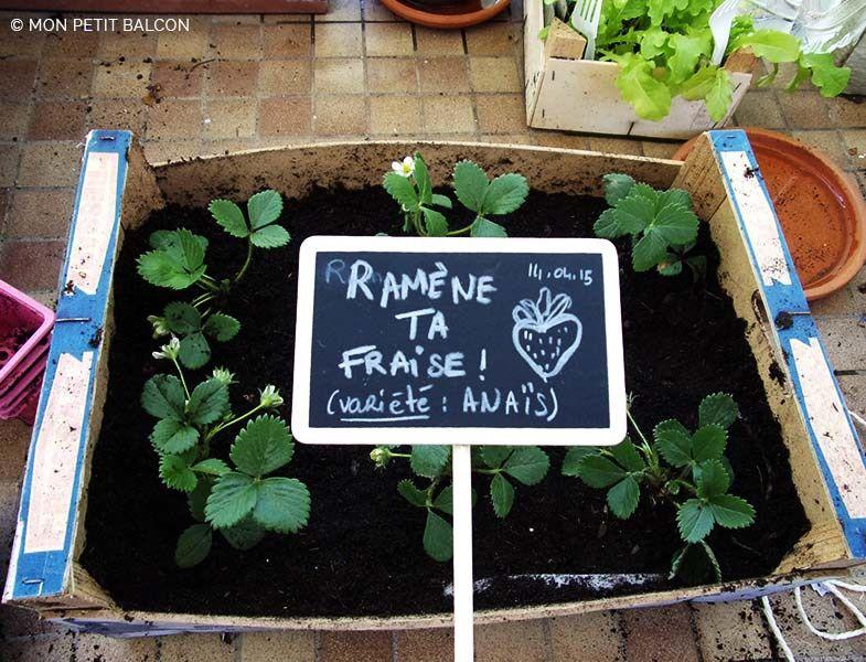 Carr de fraise planter en cagette dans un potager sur balcon jardins touts petits pinterest - Potager en carre que planter ...