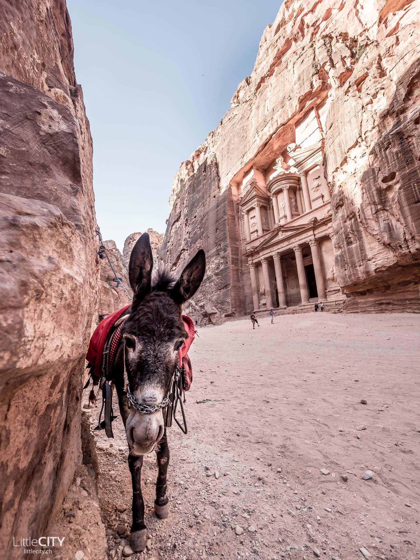 Petra Jordanien Hilfreiche Reisetipps Spannende Fakten Mit Bildern Petra Jordanien Jordanien Reisen