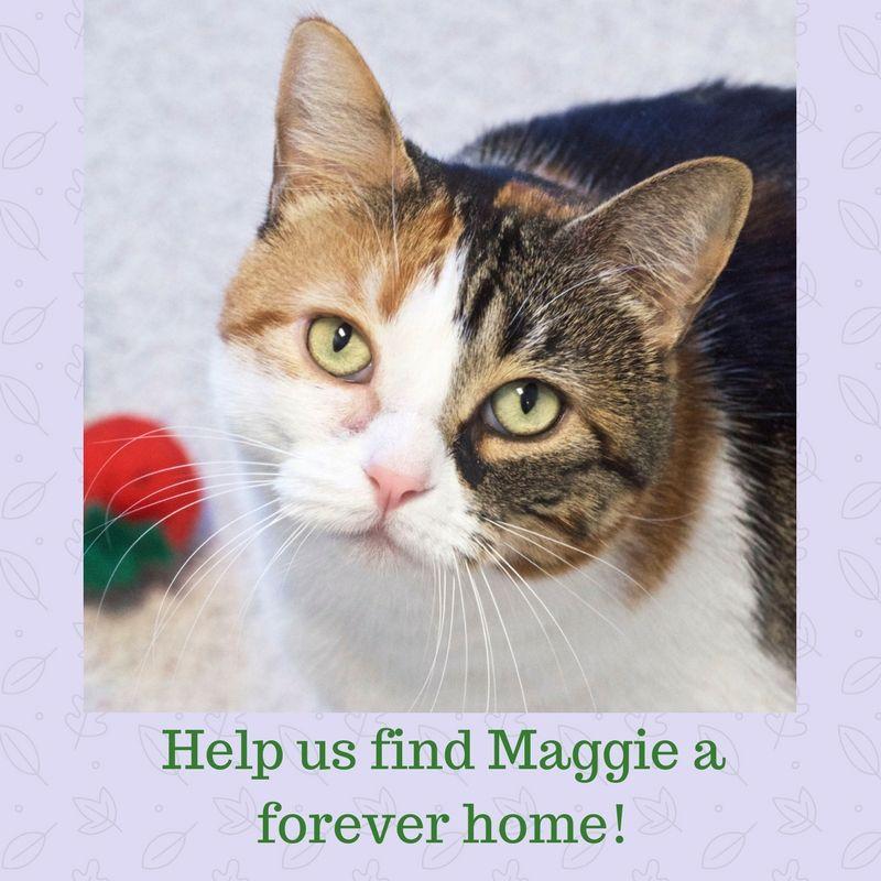 Adoptable Pets Animal hospital, Pets, Pet health care