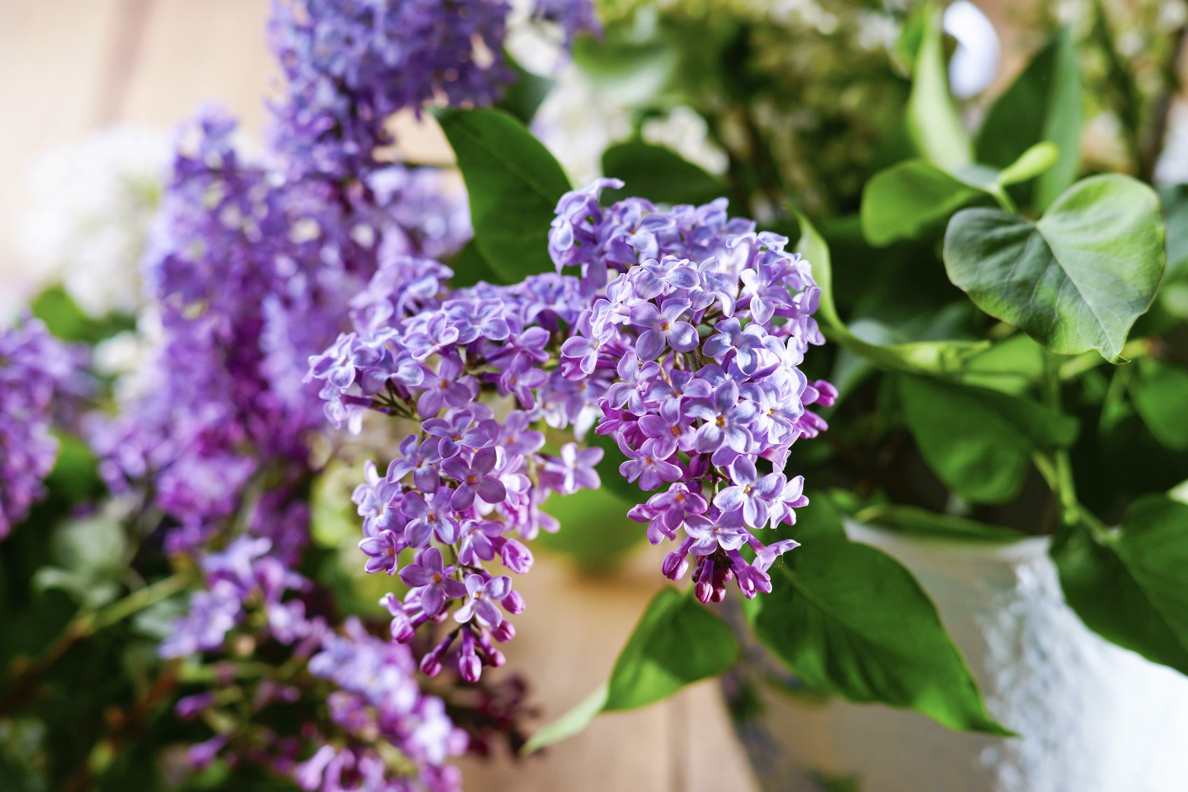 Container Grown Lilacs Learn How To Grow Lilac In A Pot Lilac Plant Growing Vegetables Flowering Bushes