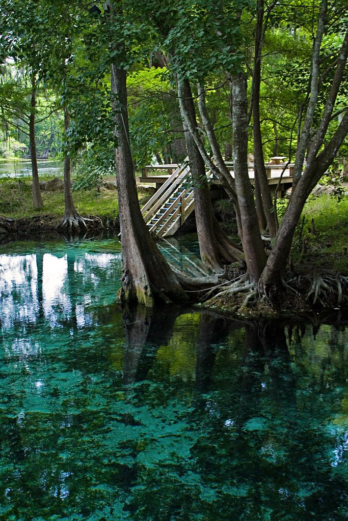 10 More Florida Swimming Holes That Will Make Your Summer Memorable Part Ii Natural Springs In Florida Florida Springs Visit Florida