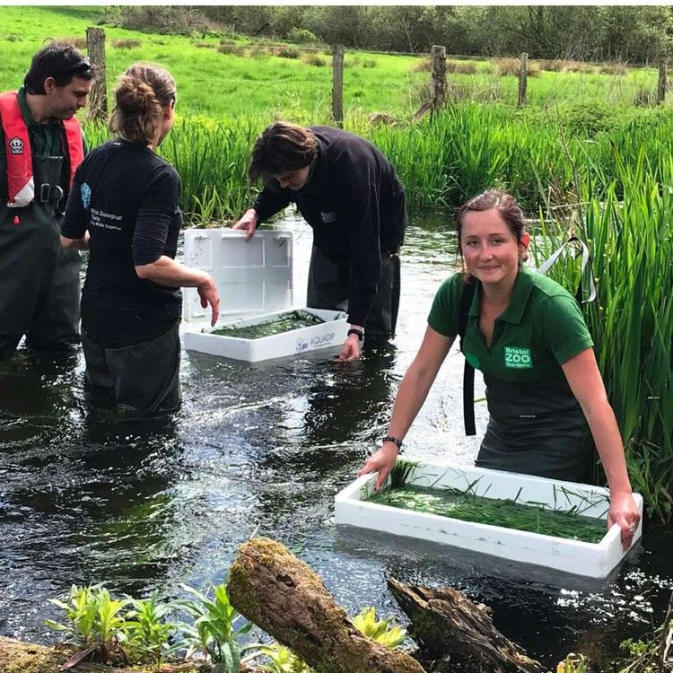 Endangered UK crayfish released into the wild — BBC