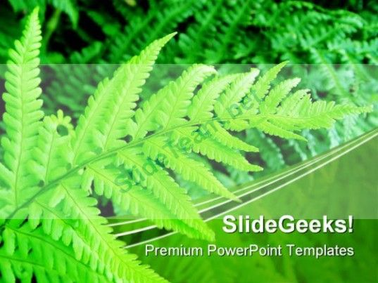 Green Fern Nature PowerPoint Templates And PowerPoint Backgrounds - nature powerpoint template
