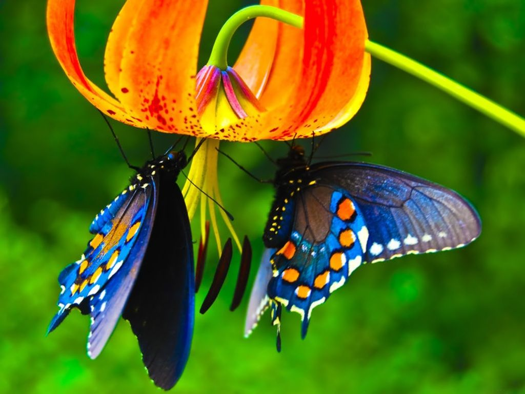 Beautiful Flowers In The World Butterfly The Most Beautiful