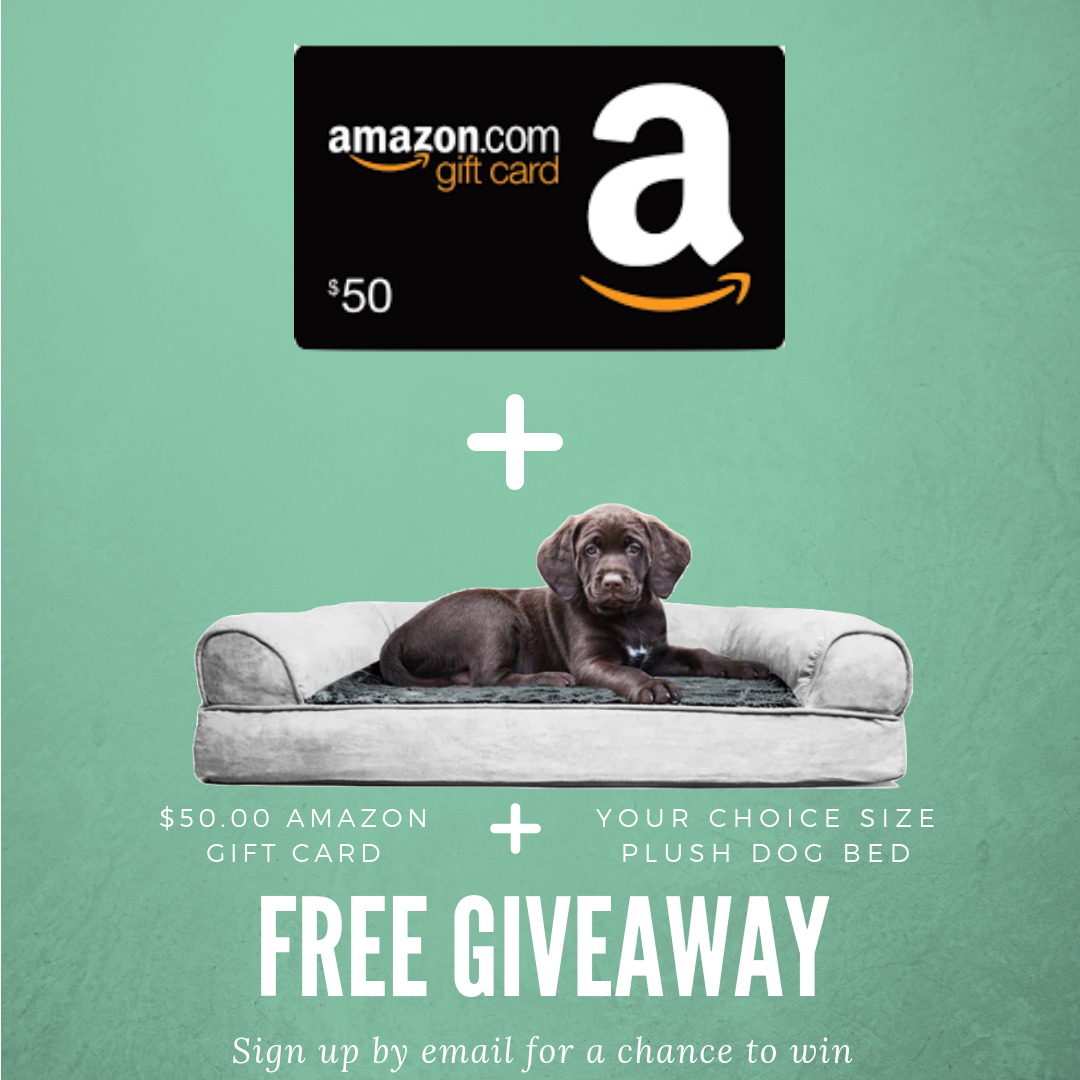 50 Amazon Gift Card and a Plush Dog Bed Giveaway Plush