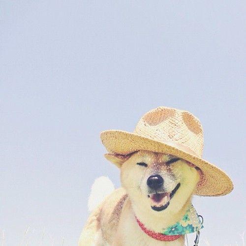 Look like my dingo<3