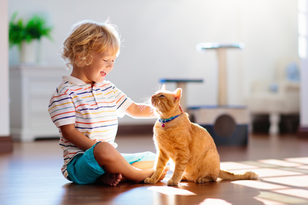 Child Playing Cat Home Kids Pets Kids Playing Child Home Cat Pets Animals For Kids Cats Cat House