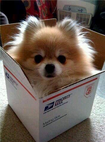 Dog In A Box Cute Animals Cute Dogs Animals