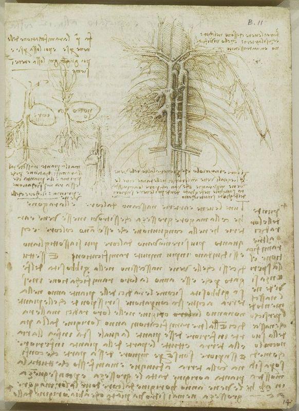 Leonardo da Vinci (Vinci 1452-Amboise 1519), Recto The heart