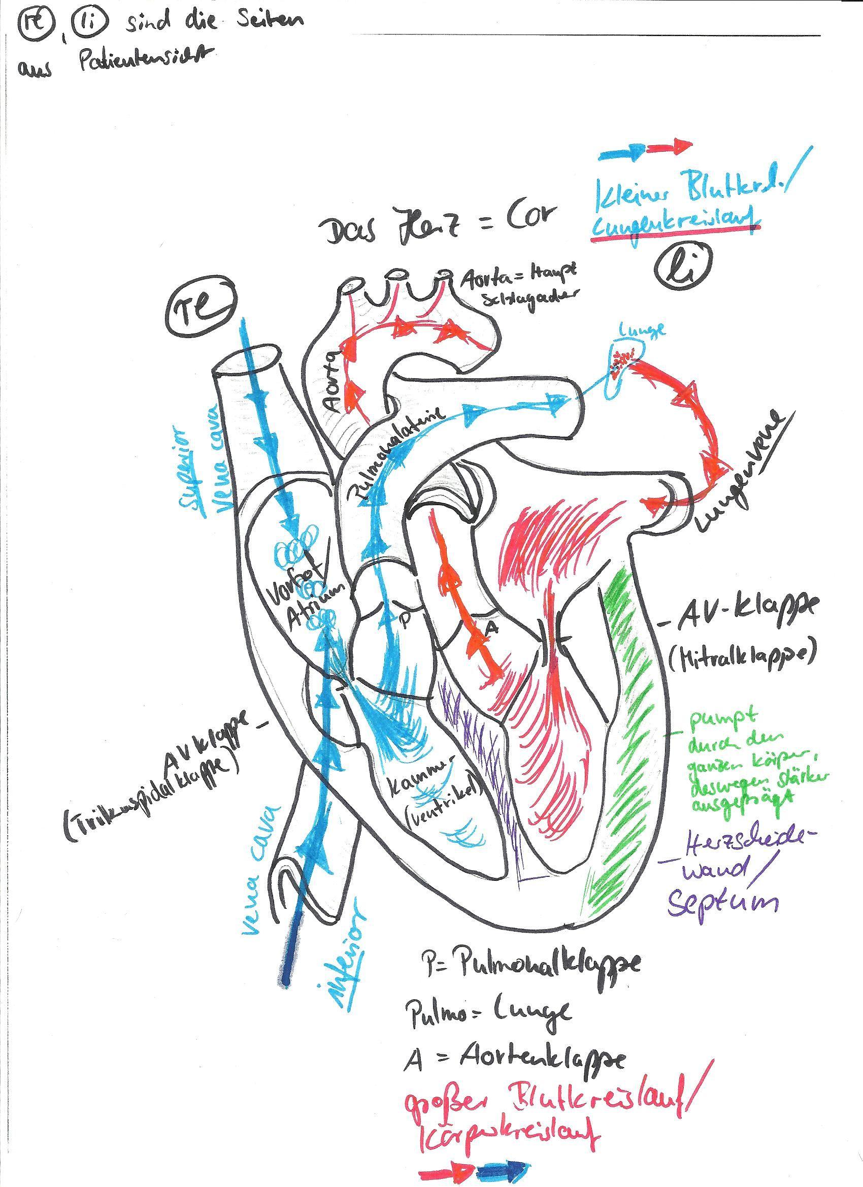 Tambah Pinter, Gak Ditanggung [View 20+] Skizze Herz Aufbau
