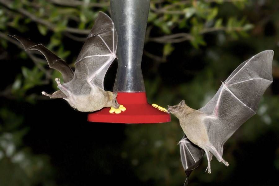 How to photograph bats in your backyard Just bats