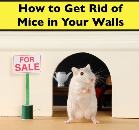 Mice In Walls Get Rid Of Them With The 3 Methods