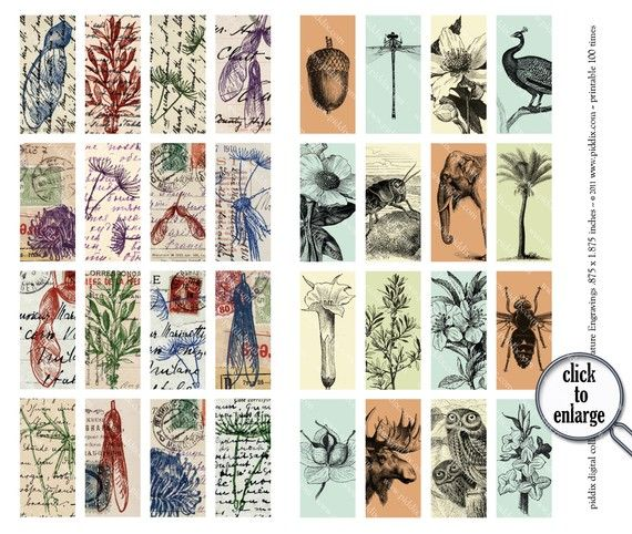 Digital Collage Sheet Two in One Nature Engravings in by piddix