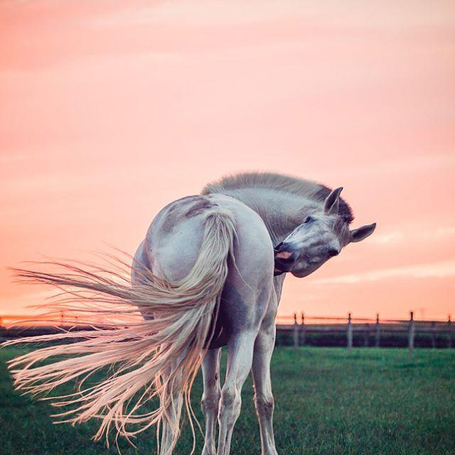 Pin Von Ella Auf Foto Inspiration Pferde Pferdefotos Pferdeliebe