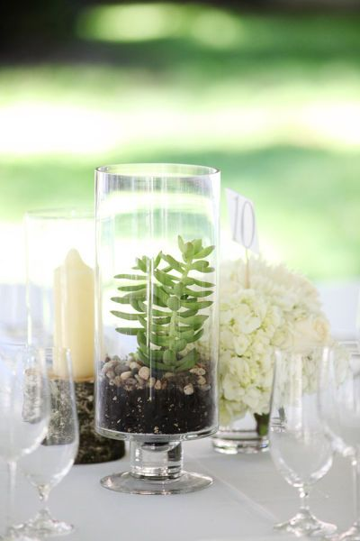 diy backyard wedding by a simple photograph in 2018 wedding ideas rh pinterest com