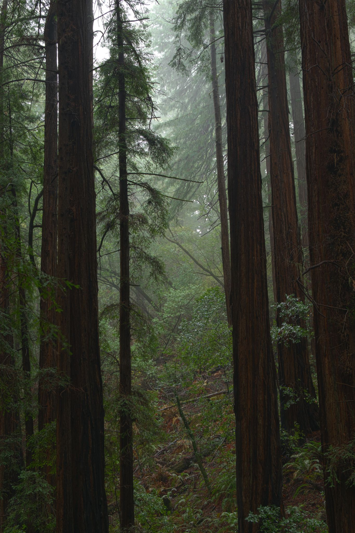 Muir Woods Rain The Best Thing One Can Do When It S