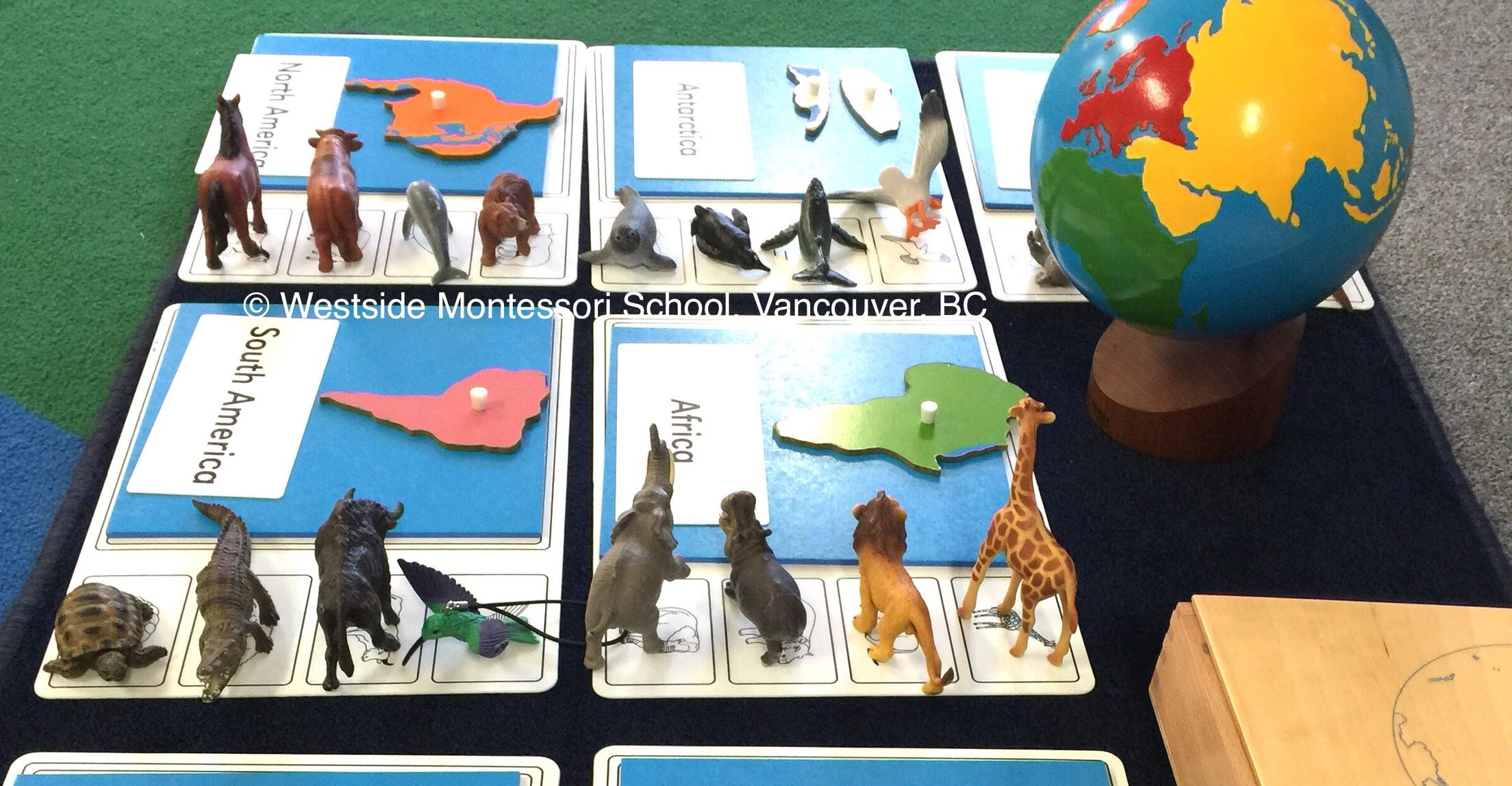 Matching And Sorting Animals Of The Continents This Is A Relatively New Material From Nienhuis