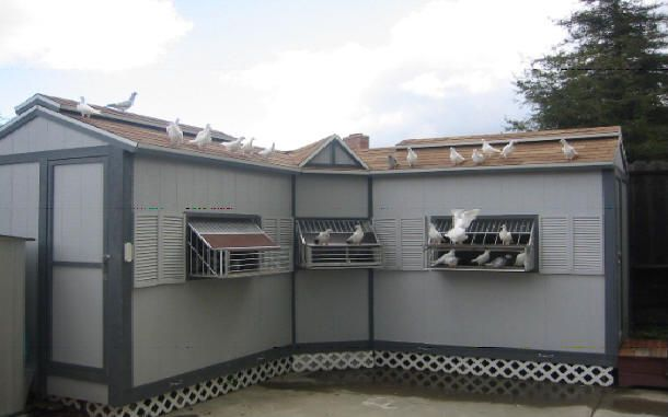 How To Build Pigeon Cages Philippine Pigeon Racing
