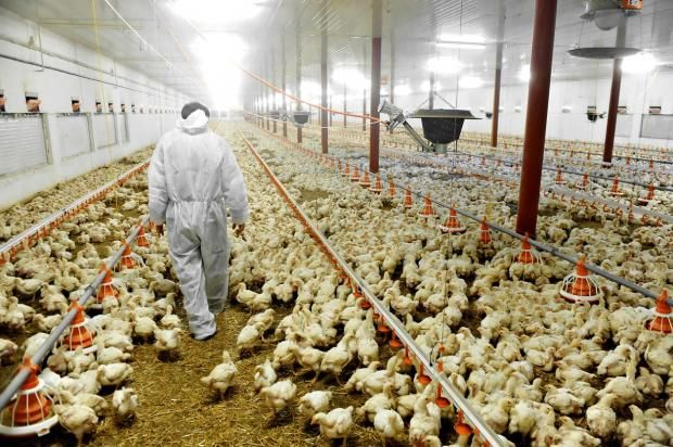 This Investigator Goes Undercover In Factory Farms To Expose The