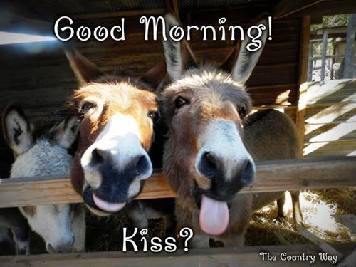 Good Morning Kiss Good Morning Animals Funny Animal Pictures Cute Funny Animals