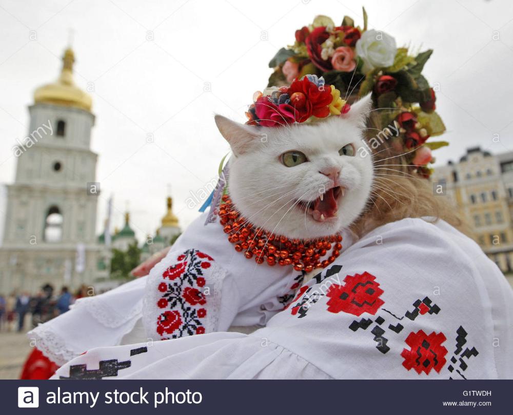 Ukrainian Cat Google Search Cat Dresses Vyshyvanka Cats