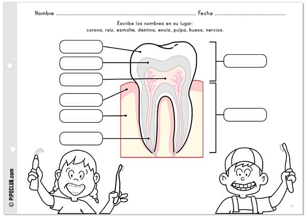 Actividades Para El Blog De Pipo Worksheets For Pipo 39 S Blog Human Body Lesson Science Word Wall Dental Kids