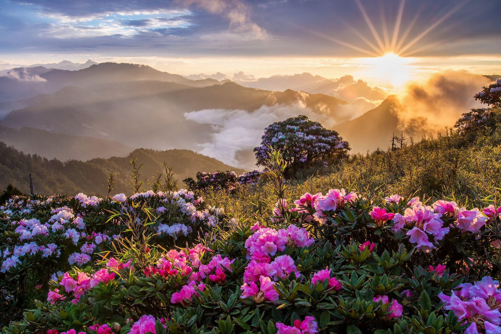 Terre Nature Paysage Rayon De Soleil Soleil Pink Flower Fleur Nature