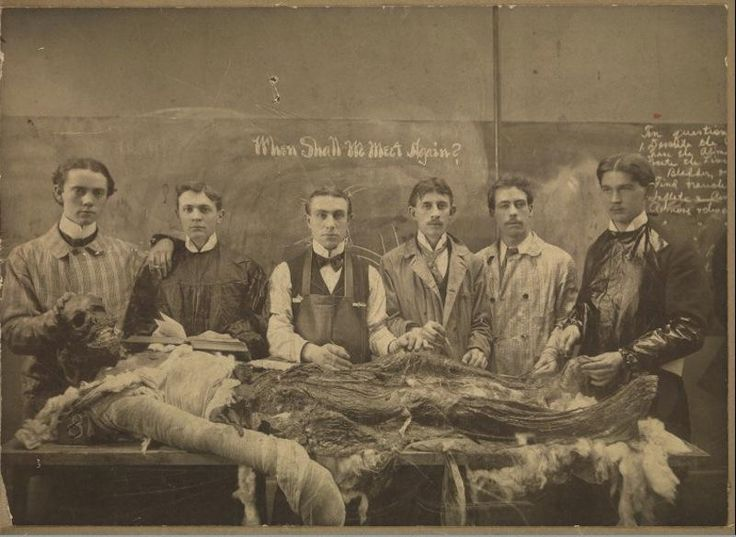 Victorian Medical Students Learning Anatomy In The Cadaver Lab