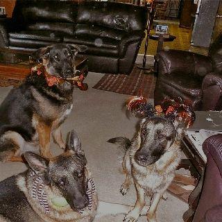 The gang at Halloween.
